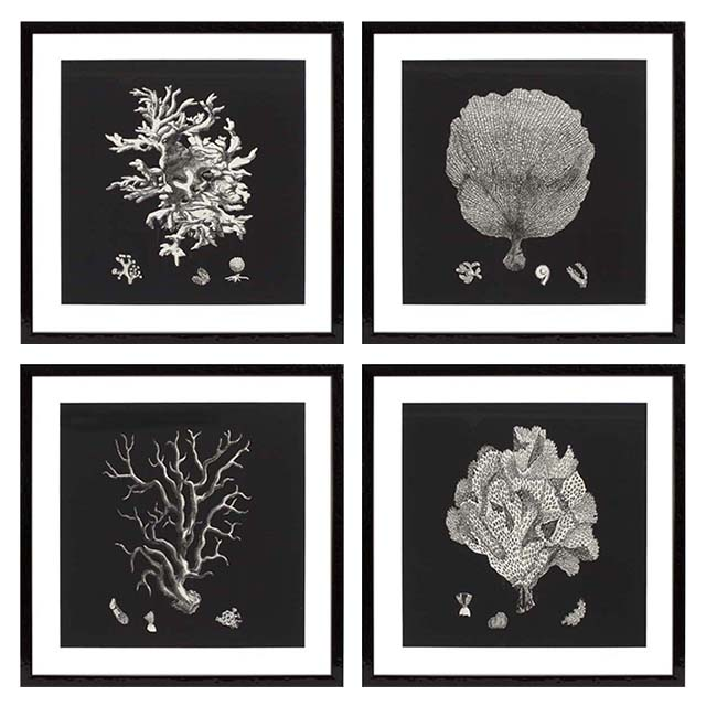 Prints EC191 Black & Tan Corals Set of 4