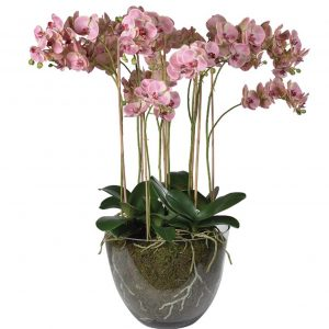 Flowers in Containers