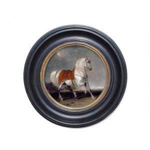 Porthole Collection - Arab Horse